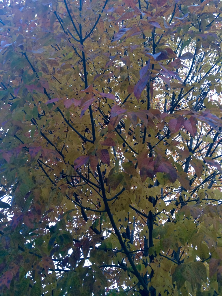 Photo Oct 23, 5 07 42 PM